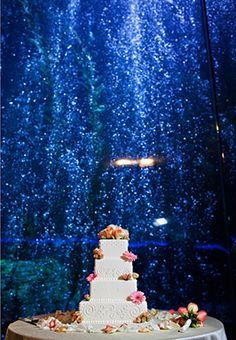 aquarium wedding but I'm thinking just an aquarium reception Unique Wedding Venues, Wedding Themes, Wedding Styles, Wedding Ceremony, Wedding Decorations, Sister Wedding, Dream Wedding, Wedding Shit, Wedding Dreams