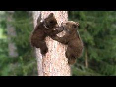 Little Brown Bears 2