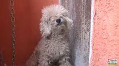 """""""O Grito do Bicho"""": Depois de viver nas ruas, este cãozinho foi transf..."""