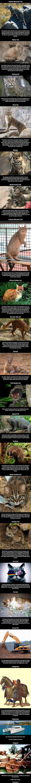 Very Unusual Cat Species#funny #lol #lolzonline