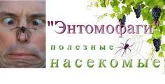 хи-хи.))