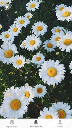 37 new ideas flowers photography wallpaper backgrounds daisies Cute Backgrounds, Aesthetic Backgrounds, Aesthetic Iphone Wallpaper, Cute Wallpapers, Aesthetic Wallpapers, Wallpaper Backgrounds, Iphone Backgrounds, Spring Backgrounds, Iphone Wallpapers