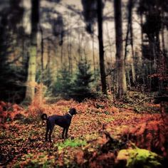 Muri-Wald Instagram Posts, Animals, Animaux, Animales, Animal, Dieren