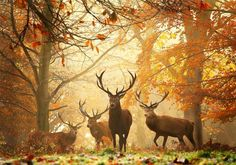 Deer in Richmond Park, London on an early Autumn morning. Photo by Alex Saberi.