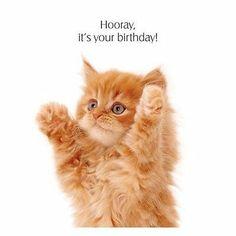 Ginger Kitten Birthday Card Hooray It's Your Birthday!, Cat Greeting Card NEW Happy Birthday Kitten, Happy Birthday Ginger, Cat Birthday Wishes, Happy Birthday Animals, Happy Birthday Art, Happy Birthday Pictures, Happy Birthday Messages, Happy Birthday Greetings, Animal Birthday