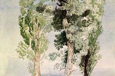 John Sell Cotman, 'A Study of Trees'. Museum no. P.34-1921