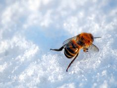 One in Three Honeybees Died Last Winter in the US | Inhabitat - Sustainable Design Innovation, Eco Architecture, Green Building