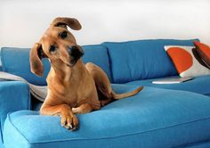 dog-friendly turquoise sofa