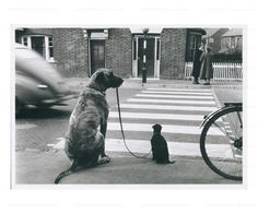 Big Dog Walking a Small Dog, photographic print