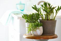 plantas e flores  banheiros e lavabos Emme Interiores  (29)