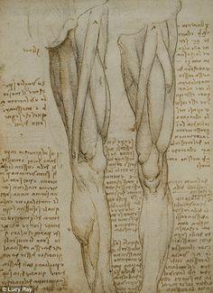 Te compartimos algunas de las mejores frases de Leonardo Da Vinci, un hombre que mientras aprendía a vivir, aprendió a morir.