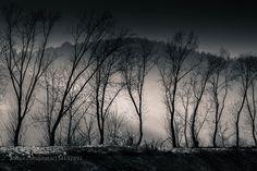 trees by attilaadam85. Please Like http://fb.me/go4photos and Follow @go4fotos Thank You. :-)
