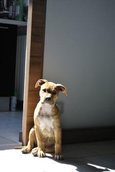 ricordi Bull Terrier, Dogs, Animals, Animales, Animaux, Pet Dogs, Doggies, Animal, Animais