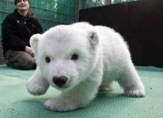 Polar Bear .!