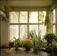 a sun room for my creatures.