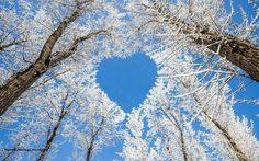 Heart shape in trees