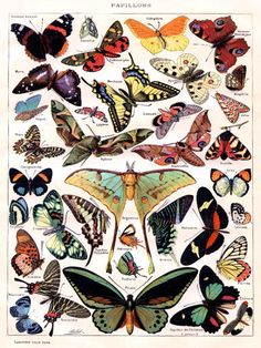 Vintage POSTER.Butterflies.Papillon.Room art Decor.Home interior decoration.918  #InteriorDesigns #Vintage