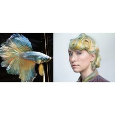 """""""I picked a betta fish as a reference for Gina's hair because I really like the way that the colors in their tails flow organically when they're swimming."""" Colorist @roxiedarling explains. #natureinspiration #artimitateslife"""