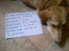 Susan Strain saved to dog truths- funny things for the soul sayings about and pets, and pets 7 vet an aayog cherman, and pets esl flashcards bodyparts, is it true petco and petsmart kill animals trophies unlimited. Animals And Pets, Funny Animals, Cute Animals, Wild Animals, Dog Shaming Photos, Computer Humor, Cat Shaming, Poor Dog, Sweet Stories