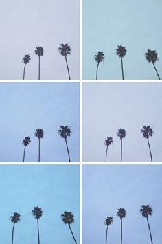 california palms | jay adores