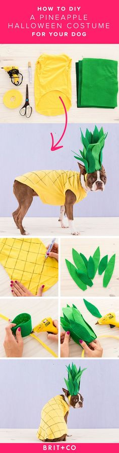 Use this tutorial to DIY a super cute pineapple costume for your pooch in just 4 steps.