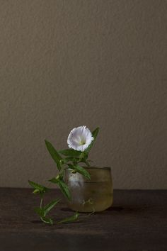Toshiro Kawase flower a day  I could pin each and every one of these...so lovely...explore all the pics on:  http://www.shinchosha.co.jp/tonbo/blog/kawase/2011/08/