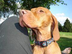 MeinFerienhund - Prinz Hajdu