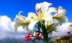 ¿Cuáles son las flores de la Primavera? - ViviendoSanos.com