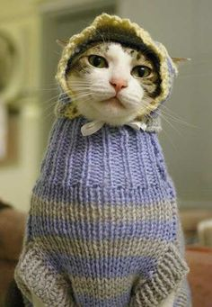 Luckily for my cat, I do not know how to knit.  Cats in bonnets are classic though.
