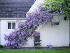 Did you know I absolutely love wisteria? It was part of my wedding! Not sure why but I love purple flowers!