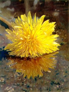 A fallen dandelion blossom reflected in a rain puddle. Who thinks to paint that? Just wonderful! Angela Bartlett - Colored Pencil