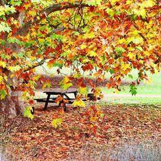 Golden Valley Tree Park  WA
