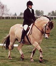 The Fjord Horse- Horse Breed - Pony Breed - Horse Breeding ...