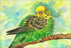 Original Aquarell Bild Vogel Wellensittich Papagei Watercolour Painting Bird Budgerigar Parrot Parakeet Tier Animal