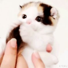 Perhaps your new #kitten is in need of treats? Or maybe he is just as happy as this kitty... http://www.entirelypets.com/get-naked-kitten-health-treats.html?utm_source=facebook&utm_medium=web&utm_campaign=epfbadgifproducts