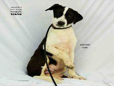 09/13/16-ROSENBERG, TX - URGENT - Pets at Ft. Bend Animal Control September 9 at…