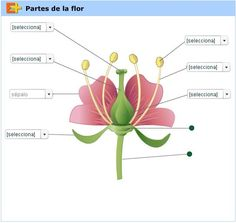 Post-It Labels for the Parts of a Flower | Apologia Botany ...