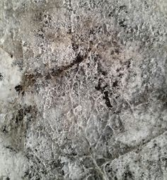 Mold Spores and Mushrooms