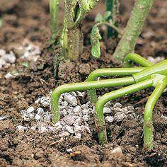 www.rustica.fr - Nourrir et stimuler le potager pour une bonne récolte - Apports d'engrais bio