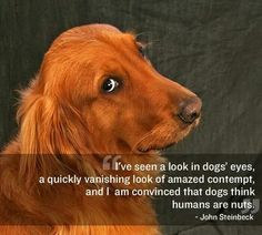 Humans are nuts