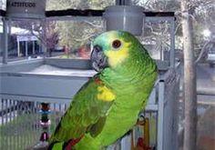 Talking Bird - Bing Images