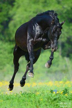 (3) Mundo dos Cavalos