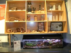 indoor nature set-up - LOVE LOVE LOVE THIS!!!!