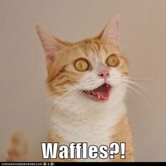 I can't judge him - I get pretty excited by waffles, too