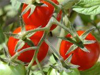 Humor, Vegetables, Garden, Food, Garten, Humour, Lawn And Garden, Funny Photos, Vegetable Recipes