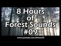 8 Hours of long relaxing forest, nature and bird song sounds for sleep, meditation, yoga and relaxation.   If you listen to this long forest sound video during sleep or meditation you will feel peaceful and calm. Great for tinnitus, meditation, yoga, when you study, go to sleep, have insomnia or have sleep deprivation.  Please like, subscribe and comment if you enjoyed this video. It will really help me out a lot. :)  http://www.youtube.com/subscription_center?add_user=8hoursof