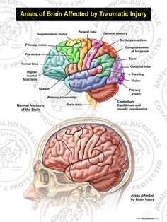 Cerebrum: Functions Of The Largest Part Of The Human Brain ...
