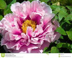 japanese flower - Google zoeken