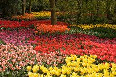 Flower Garden Keukenhof Netherlands