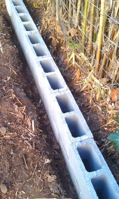 garden plotting Getting Rid of Bamboo Without Pesticides Garden, Bamboo garden, Growing bamboo, Gard Bamboo Barrier, Bamboo Hedge, Bamboo For Privacy, Bamboo Planter, Bamboo Fencing, Bamboo Landscape, Clumping Bamboo, Growing Bamboo, Privacy Plants